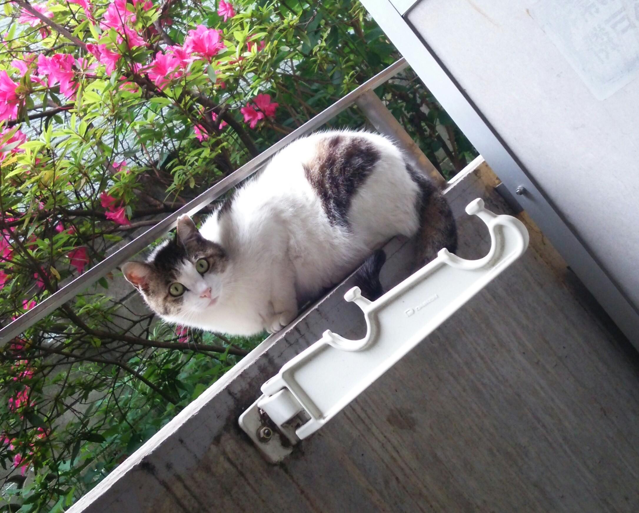 東京の新居にまた猫が…どうも猫に好かれます